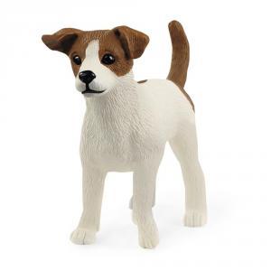 Perro Jack Russell terrier